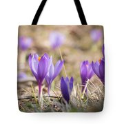 Wild Crocus Balkan Endemic Tote Bag