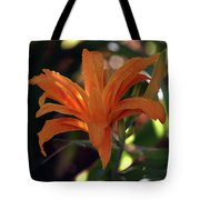 Wild Daylilies 1167 H_2 Tote Bag