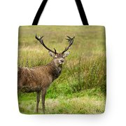 Wild Deer Animals   Tote Bag