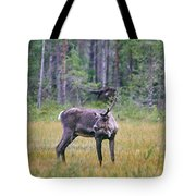 Wild Finnish Forest Reindeer 24 Tote Bag