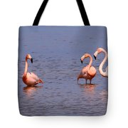 Wild Flamingos Tote Bag