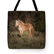 Wild Horse At Sunset Tote Bag