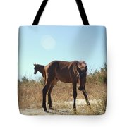 Wild Horses Desert Of Mexico Tote Bag