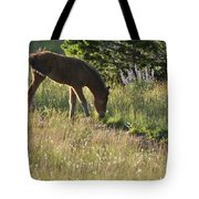 Wild Mountain Lupine Tote Bag