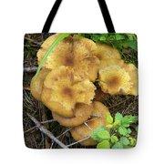 Wild Mushrooms 1 Tote Bag