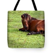 Wild Mustang At Rest Tote Bag