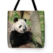 Wild Panda Bear Eating Bamboo Shoots While Leaning Against A Tre Tote Bag