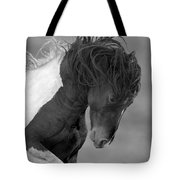 Wild Pinto Stallion Tote Bag