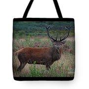 Wild Red Deer Stag Tote Bag