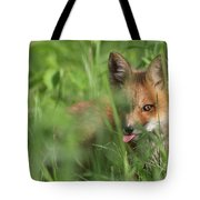 Wild Red Fox Puppy Tote Bag