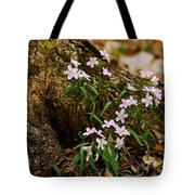 Wild Spring Beauty Tote Bag