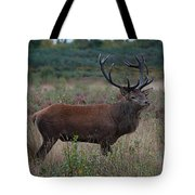 Wild Stag Tote Bag