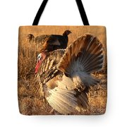 Wild Turkey Tom Following Hens Tote Bag by Max Allen