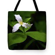 Wild White Trillium Tote Bag