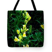 Wild Yellow Flowers On Black Background Tote Bag