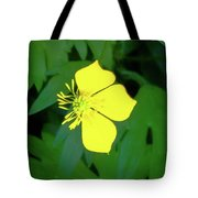 Small Sundrops Flower Tote Bag