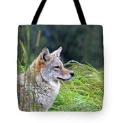 Wiley Tote Bag