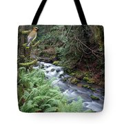Wilson Creek #14 With Added Cedar Waxwing Tote Bag
