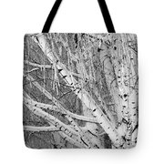 Icy Winter Birch Tree  Tote Bag