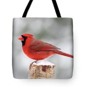 Winter Day Cardinal Tote Bag