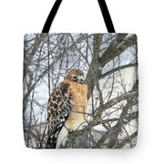 Winter Hawk Tote Bag