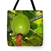 Winter Melon In Garden 2 Tote Bag