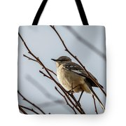 Winter Mockingbird Tote Bag