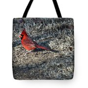 Winter Redbird Tote Bag