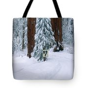Winter Road Into Sequoia National Park Tote Bag