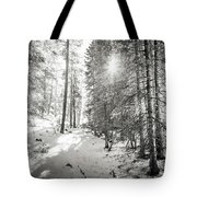 Winter Sunshine Forest Shades Of Gray Tote Bag