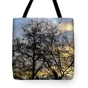 Winter Trees At Sunset Tote Bag