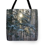 Winter's Midday Light Tote Bag