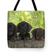 Wire-haired Dachshund Puppies Tote Bag