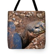 Wise Old Tortoise Tote Bag