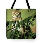Wise Watcher Tote Bag