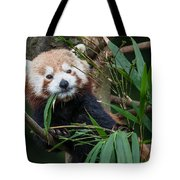 Wizened Red Panda Tote Bag