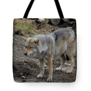 Wolf 1 Norway Tote Bag
