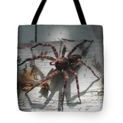 Wolf Spider Sunlight Tote Bag