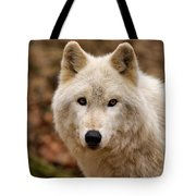 Wolf Watching Tote Bag