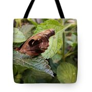 Wood Butterfly Tote Bag