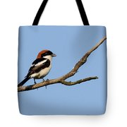 Woodchat Shrike  Tote Bag