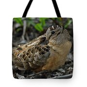 Woodcock At Rest Tote Bag