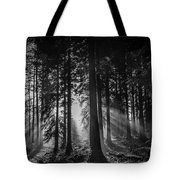 Woodland Walks Silver Rays B/w Tote Bag