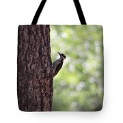 Woodpecker In New Mexico Tote Bag