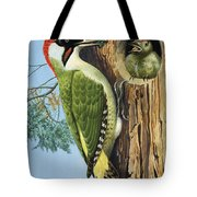 Woodpecker Tote Bag by RB Davis