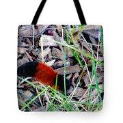 Wooly Bear 1 Tote Bag