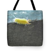 Wooly Worm In Shiloh, Tn Tote Bag