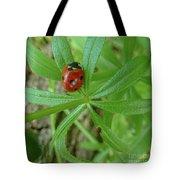World Of Ladybug 3 Tote Bag