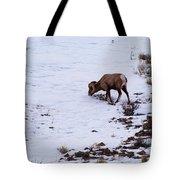 Wyoming Big Horn Tote Bag