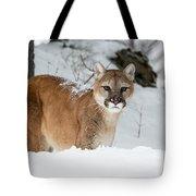 Wyoming Wild Cat Tote Bag